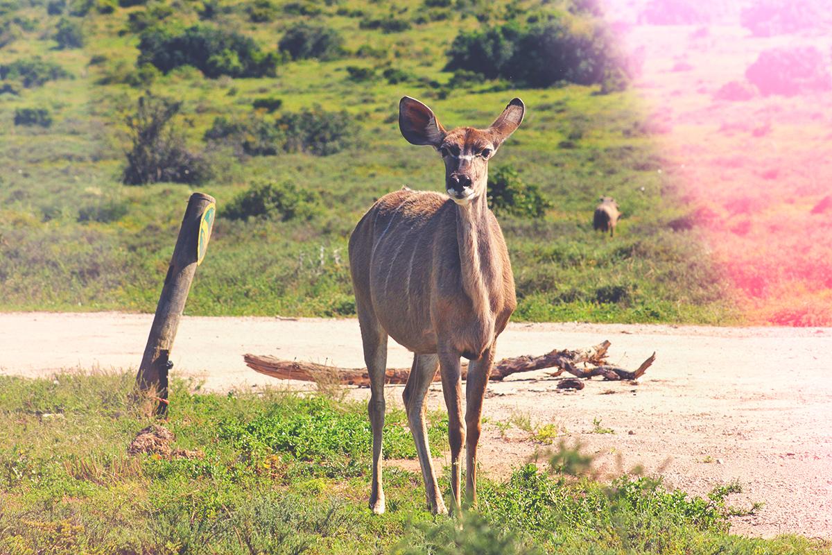 Como é fazer um safári na África do Sul?