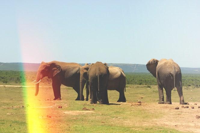 Safari - Elefantes do Addo Elephant Park