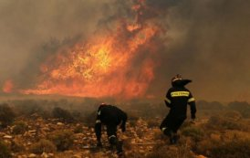 Përfshihet nga zjarri fusha në Mamushë