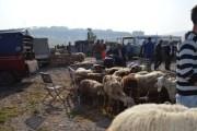 Mbyllet tregu i kafshëve në Malishevë
