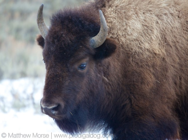 Yellowstone Winter Car Gallery