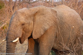 Finding Your Big Five Elephant