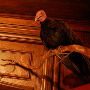 vulture 33