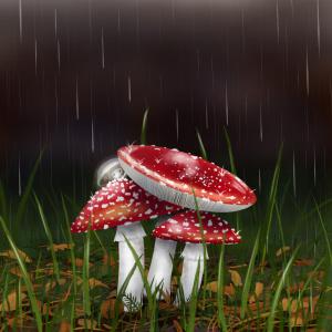Mushrooms in the rain, woodland illustration