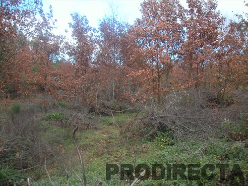 Property in Central Portugal, Property for sale in Central Portugal and the North, organic smallholdings, farms, quintas, permaculture property, country homes, ruins, renovation projects, land and eco building plots, Prodirecta, Nuno Fernandes, propertydirect, propertydirectportugal, Portugal mountains, central portugal properties, Homes, Houses, Villas, Organic Land,