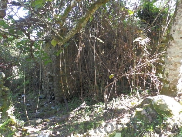 property for sale in Góis