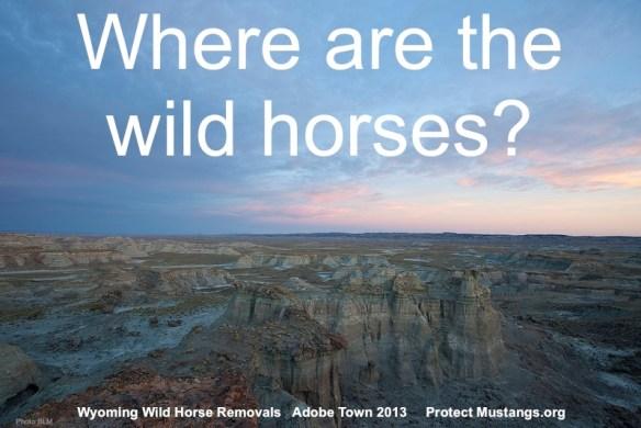 Where are wild horses?™