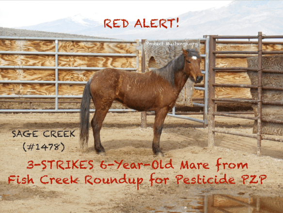 PM SAGE CREEK #1487 6 yr mare Fish Creek