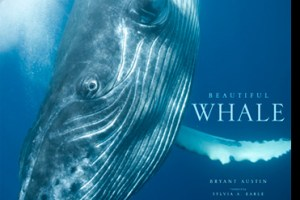 book Beautiful Whale