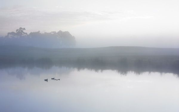 Ducks on a Misty Pond - Apple Wallpaper