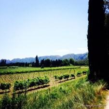 Provence wine