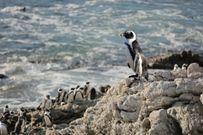 新プログラム「はらぺこペンギン・マックス」