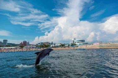 【須磨ドルフィンコーストプロジェクト】須磨の海を泳ぐジーナ(昨年の様子)