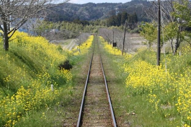 菜の花が沿線を飾るいすみ鉄道
