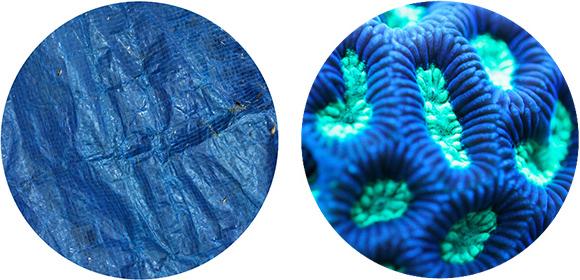 blue tarp coral