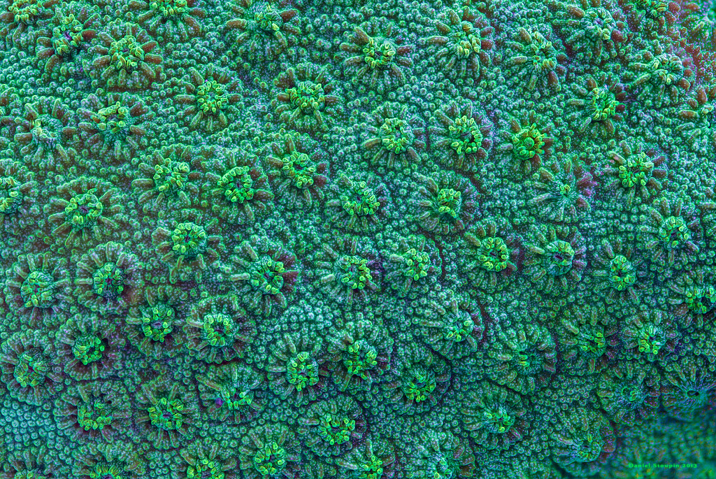 Coral surface in full-spectrum light.