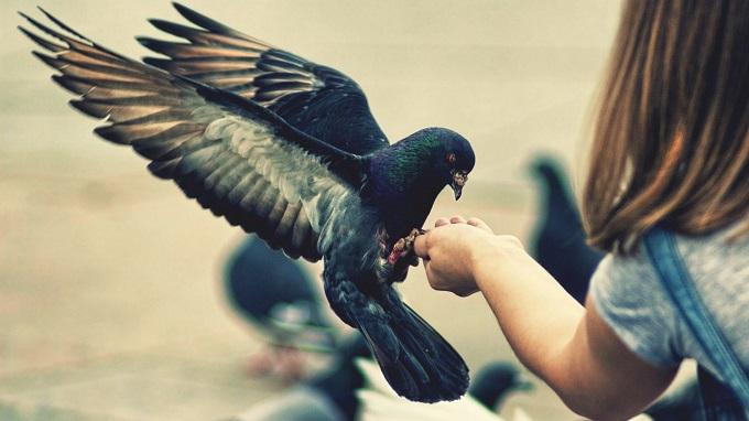 夢占い 鳥