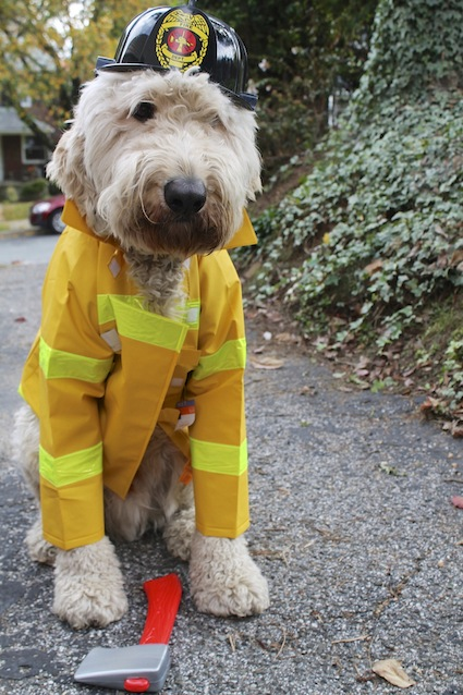 dog-firefighter