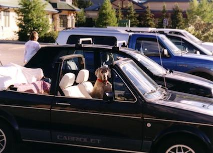 dog-older-car