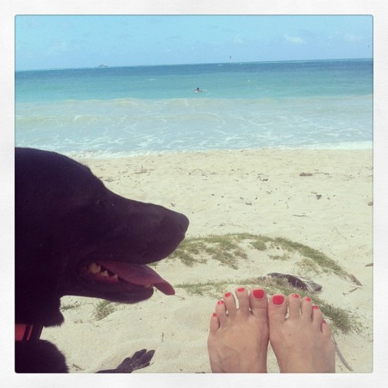 staycation dog days okprettypua