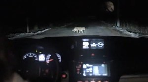 Russian Woman Hits Dog With Her Car. You Won't Believe What Happened Next (VIDEO)