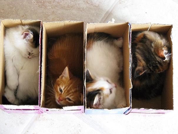 funny-cats-if-it-fits-i-sits-4