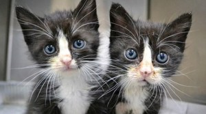 25 Adorable Animal Twins That Are Almost Impossible To Tell Apart