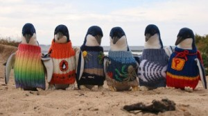 Australia's Oldest Man Helps Save Endangered Penguins, One Tiny Sweater At A Time