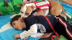 Boy And Pit Bull Duo Battle To Remain Together After School Tries To Break Them Apart