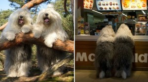 These Inseperable Sheepdog Sisters Are Adorably Photogenic