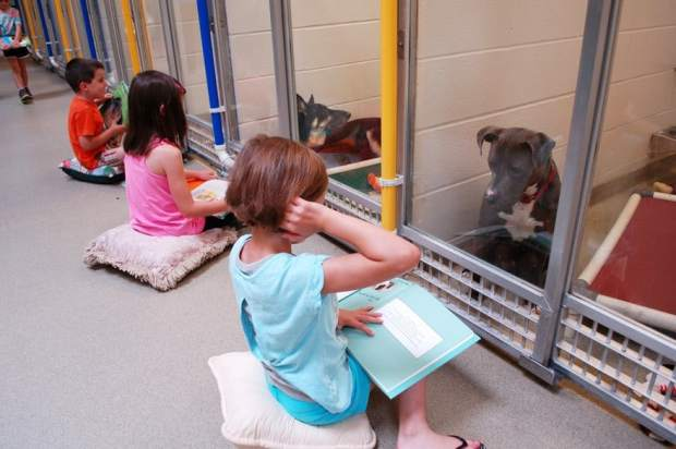 These Kids Are Reading To Shelter Dogs To Prepare Them For Home Life.