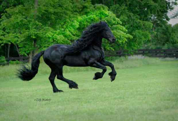 "Is This The ""Sexiest"" Horse In The World?"