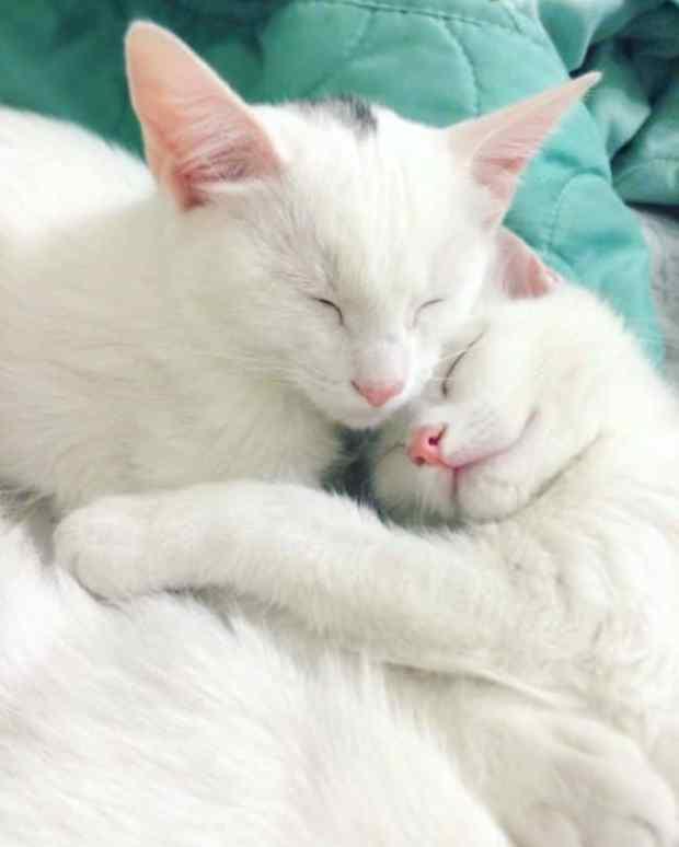 57a868c82ec8e - Cutest Cats in the World