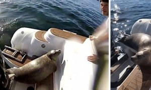 sealboat