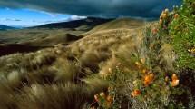 Natural-Scenery-Ecuador