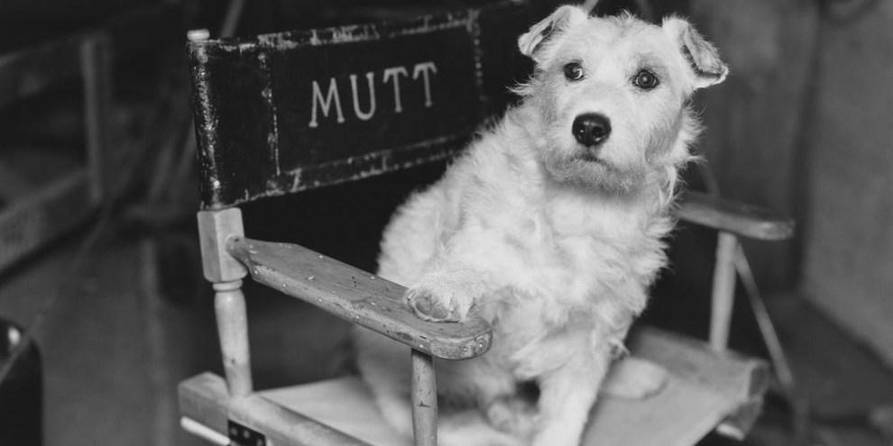 Dog - personal branding - marca personal