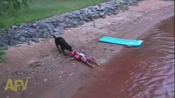 Small Of Dog Rescue Videos