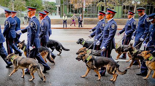 Cute funny German Shepherd dogs