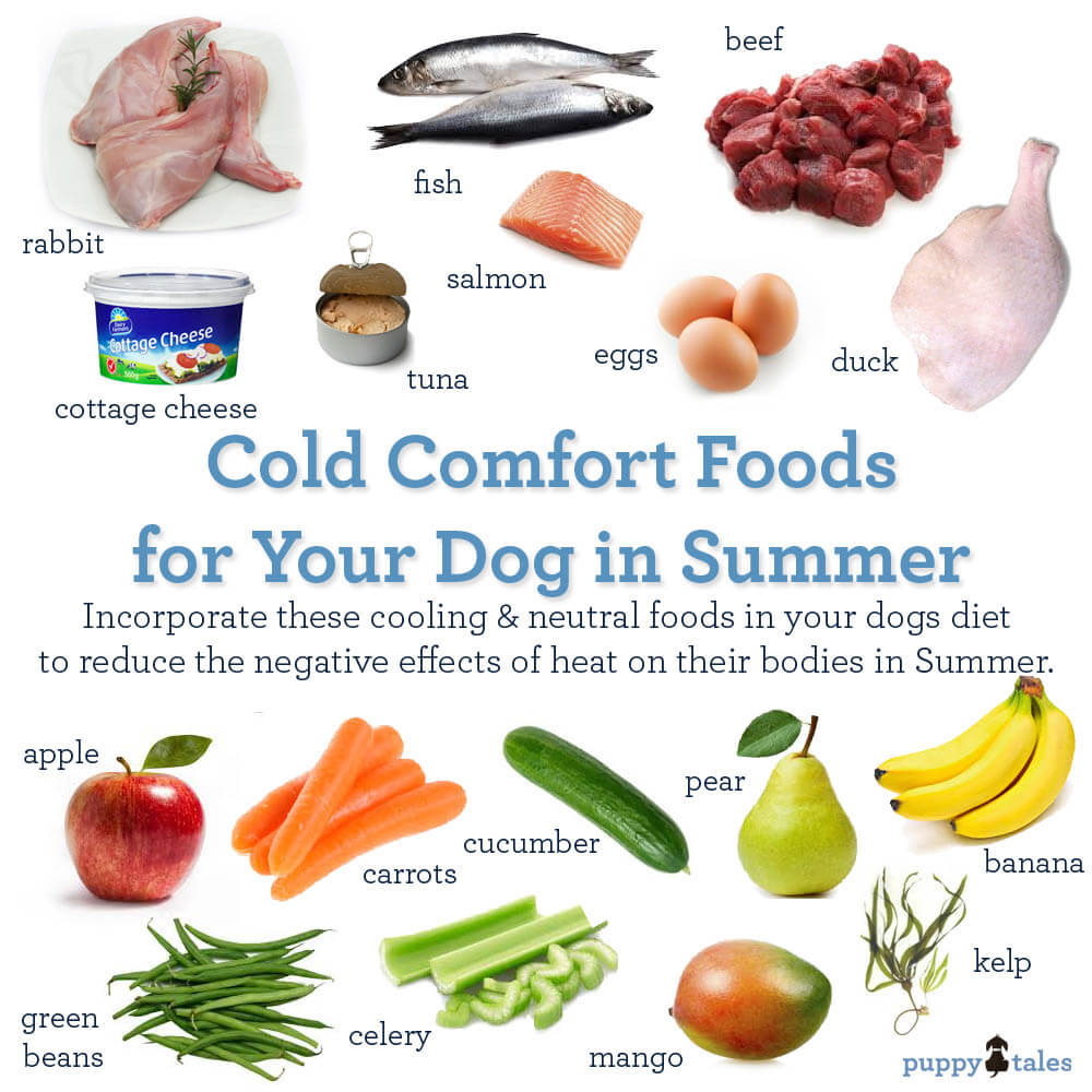 Incredible Dogs Chilly Kongs Or Tennis Balls Treats Kidney Disease Liver Disease Cottage Cheese Dogs Your Dog On Hot Days Puppy Tales Cottage Cheese bark post Cottage Cheese For Dogs
