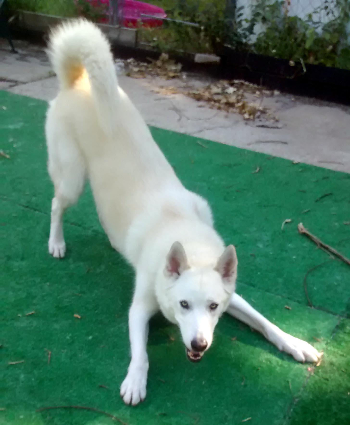 Fullsize Of Dog Play Bow
