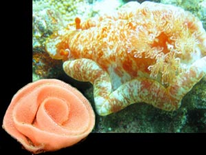 Spanish dancer with rose flower egg casing photo courtesy Sandi Stickland