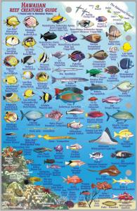 Hawaii Fish Card Oahu 2011 Side 2