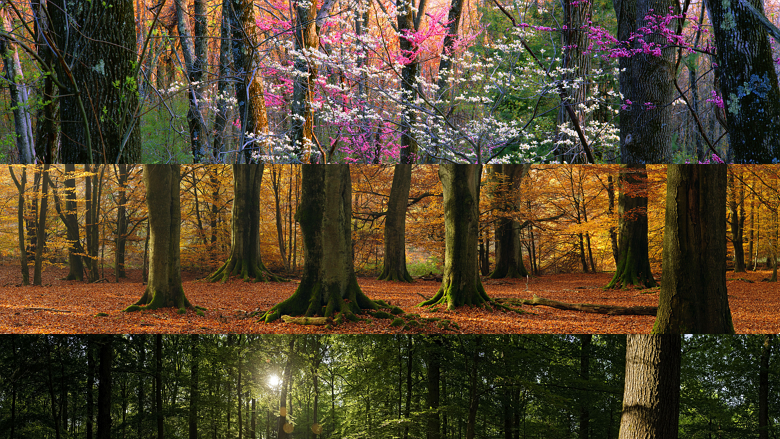 Forest panoramic theme - dual monitor wallpapers