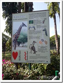 AboutGiraffe