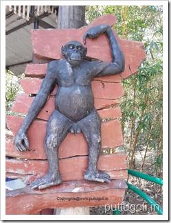 chimpanzeeAtMysoreZoo