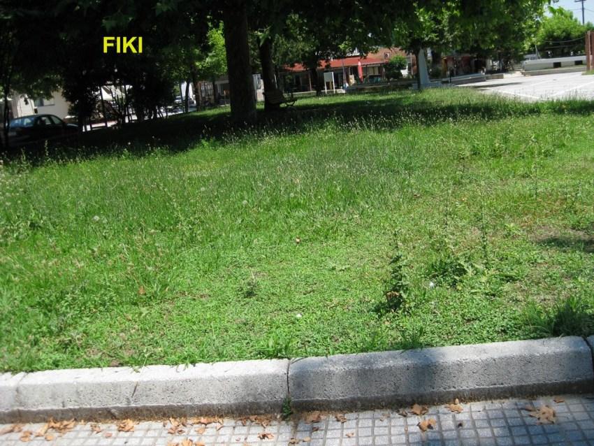 Fiki (1) copy