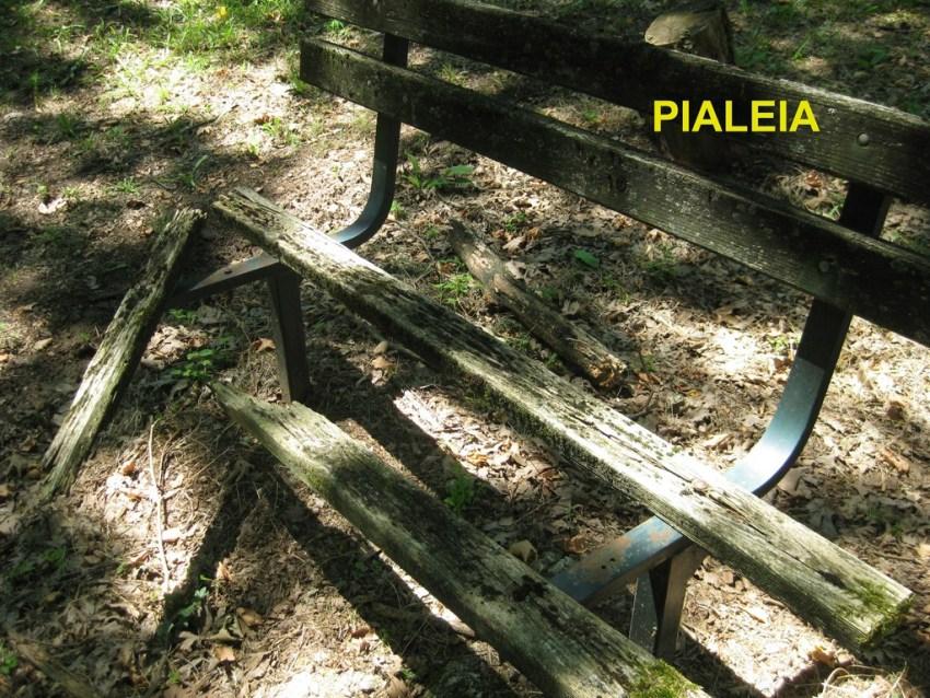 Pialeia (3) copy