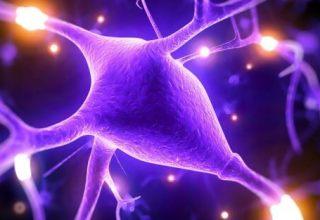 Magnesium-better-brain-abilities