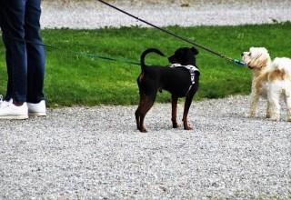 dog_walk_2