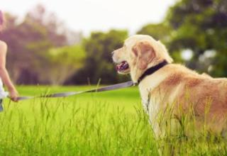 sad-little-girl-sadness-dog2